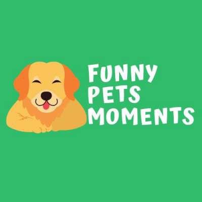 Funny Pets Moments