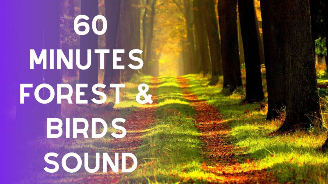 60 Minutes of Forest Bird Sound - birds chirping and singing in the forest sound effect high quality