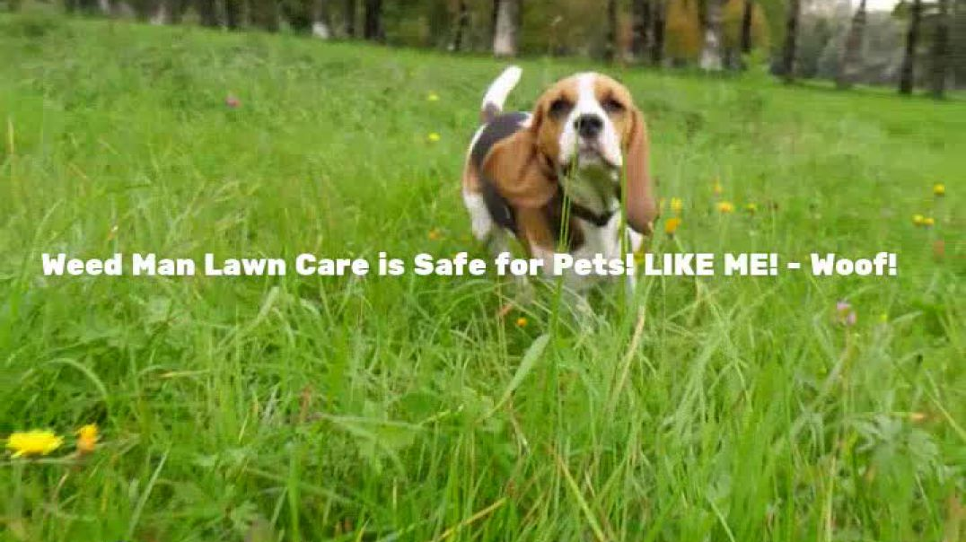 Weed Man Pet Safe Lawn Care