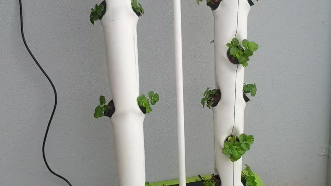 Strawberry tower hydroponics