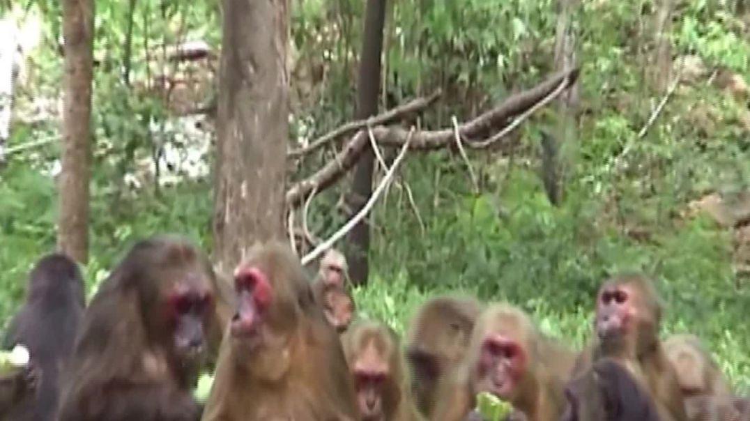 #animal #wildmonkey in thailand