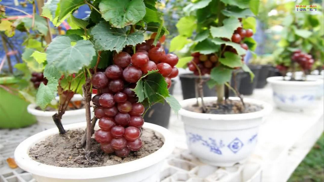 Top 8 Best Fruits To Grow In Pots in Containers