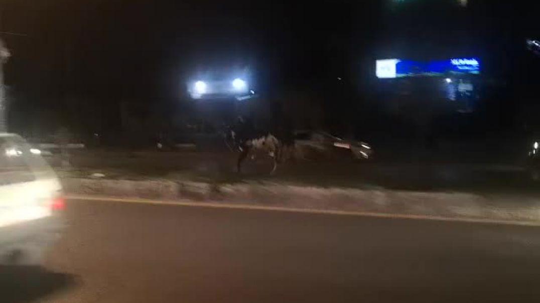 cow accident