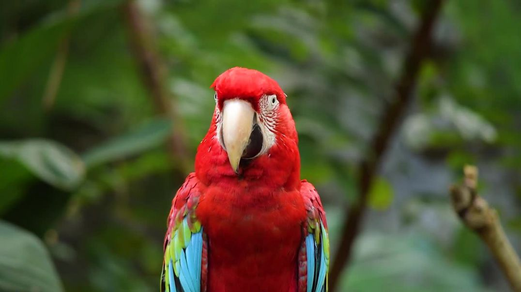 Bird Parrot Nature Animal Colorful Fauna Macaw