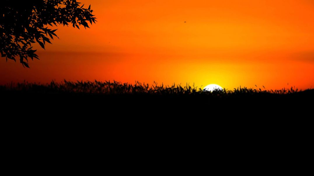 Nature Sunset Wind Sun Tree Grass