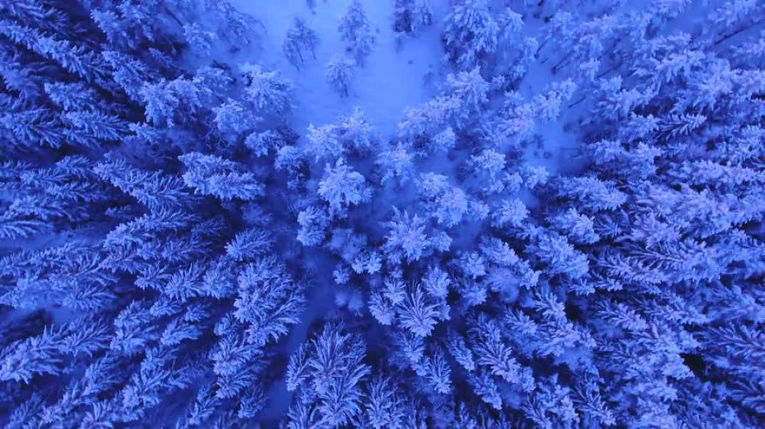 Snowy Trees Above Winter Landscape Forest Aerial
