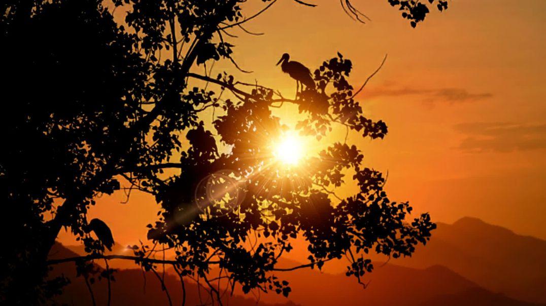 Sunset Birds Nature Sunrise Orange
