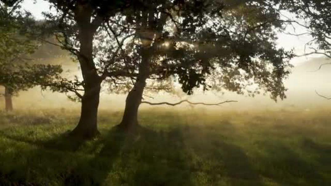 Forest Woods Mystical Morning Fairytale Sunlight