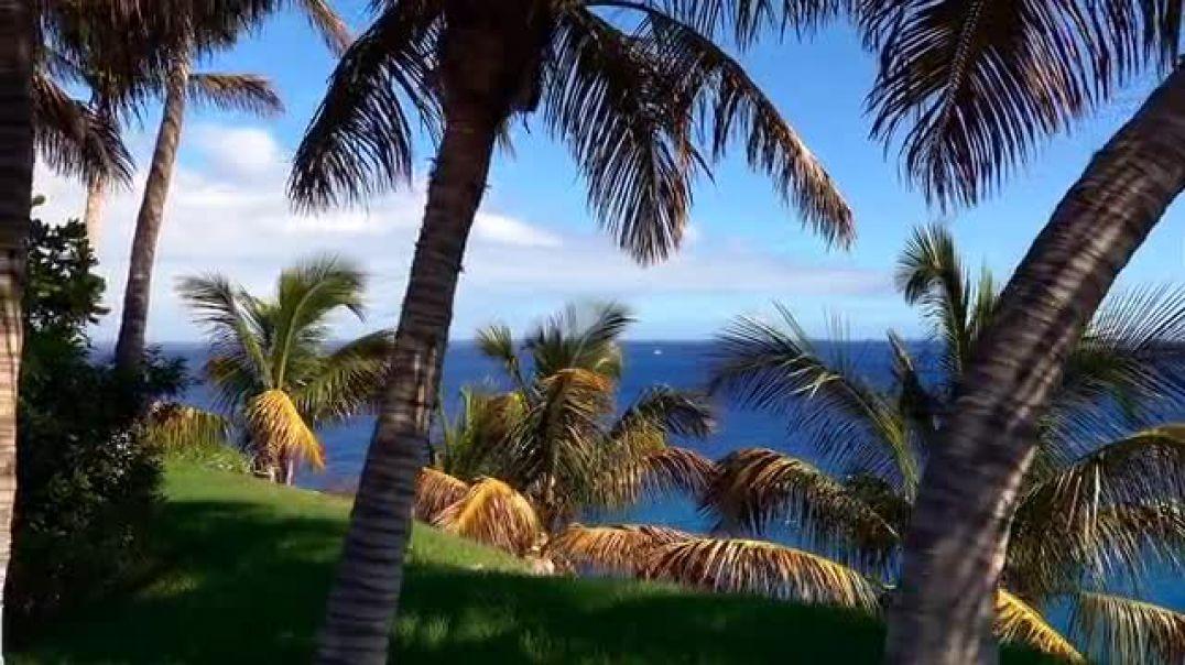 Ocean Palms Coast Walk View Sky Blue Sea
