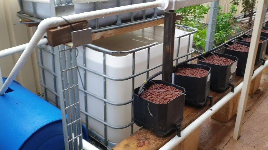 Aquaponics chop system completed