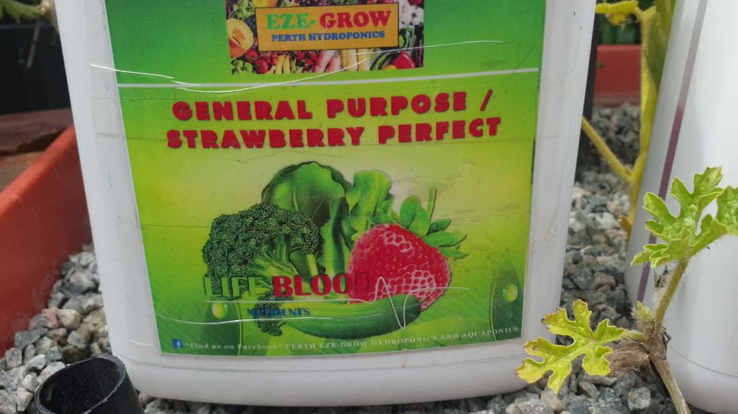 Hydroponics fertiliser i use