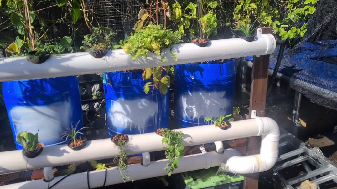 My hydroponic update and clean